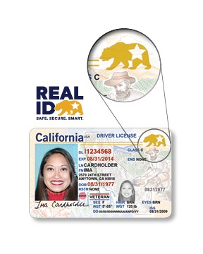 Image of REAL ID Driver License with arrow pointing to the gold star and bear